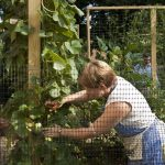 Help in the WPC Community Garden